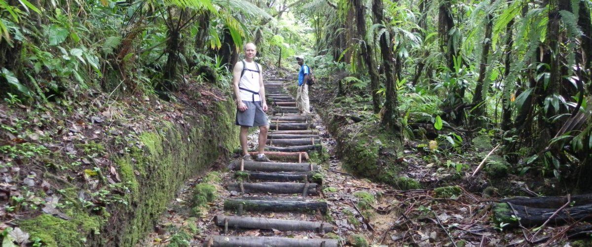 Hike a lush rainforest...