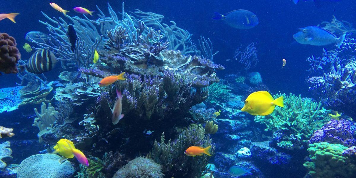 Snorkel clear warm waters...
