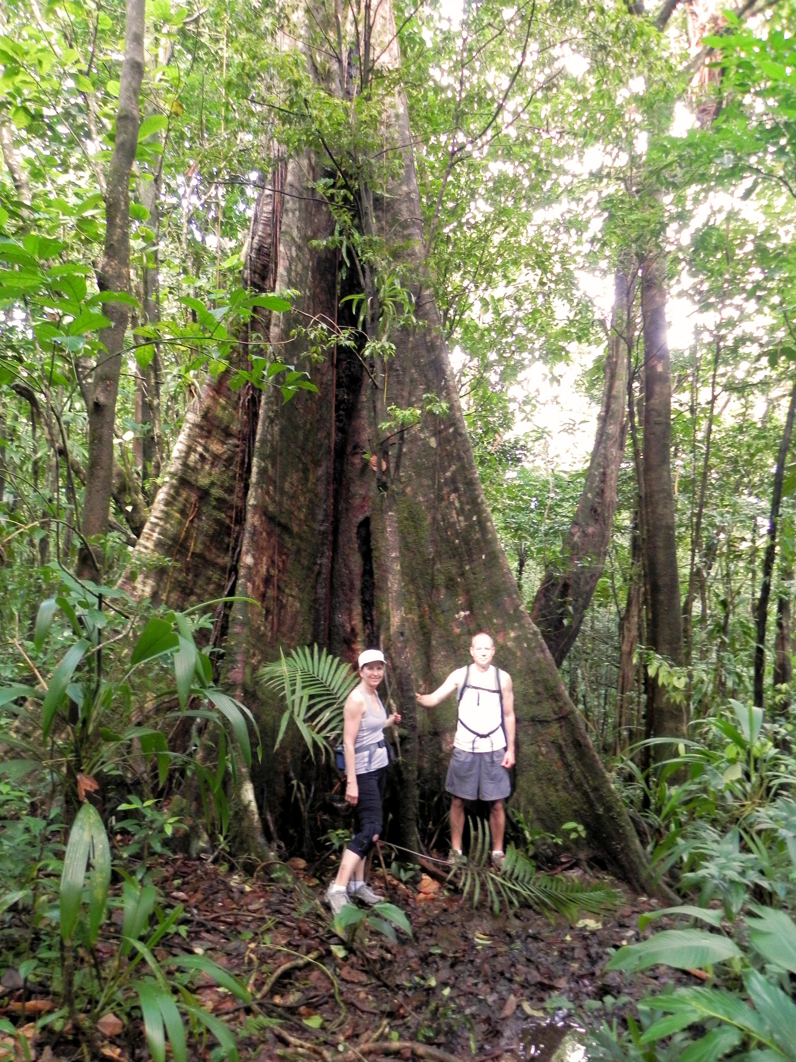 Dominica Hiking: The Waitukubuli National Trail